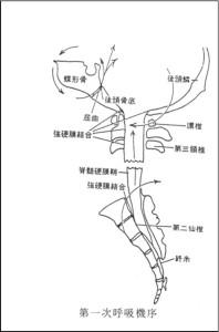 呼吸と整体の説明2